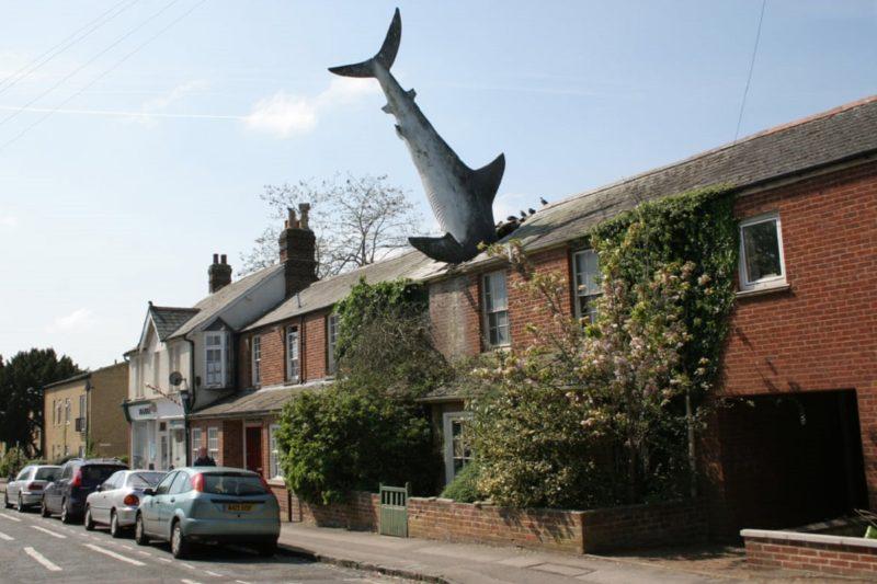 HEADINGTON-SHARK